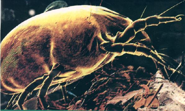 Chem-Dry dust mite treatment